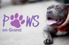 Paws on Grand